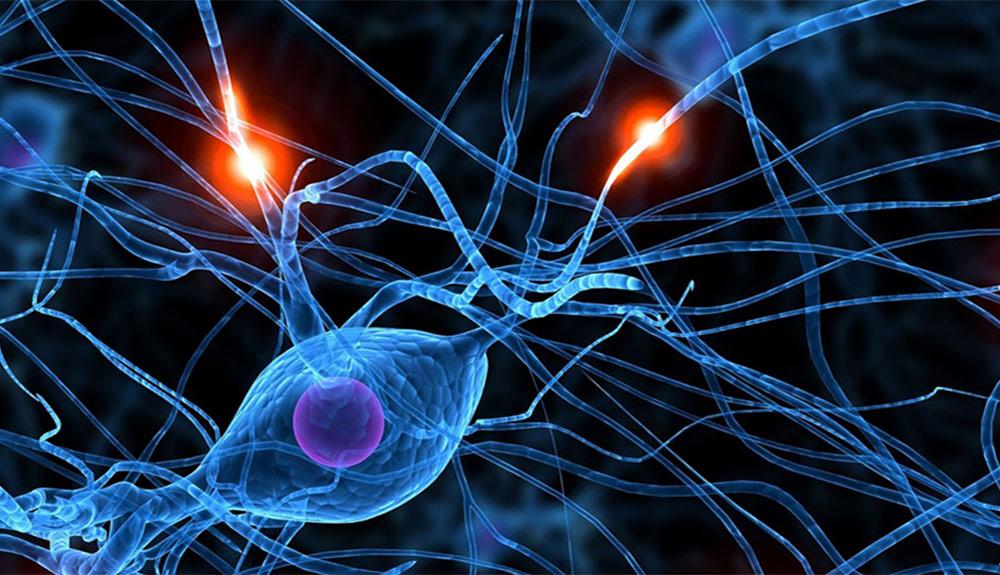 pixelshifter-stvincents-neuroscience-thumb