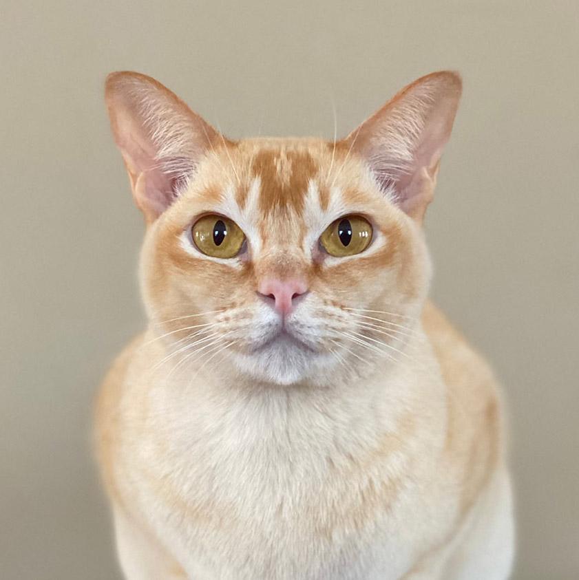 pixelshifter-the-cat-butler-thumb